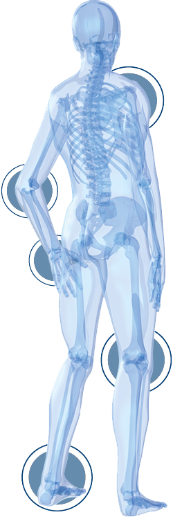 FLEXOFYTOL-articulations-squelette-1